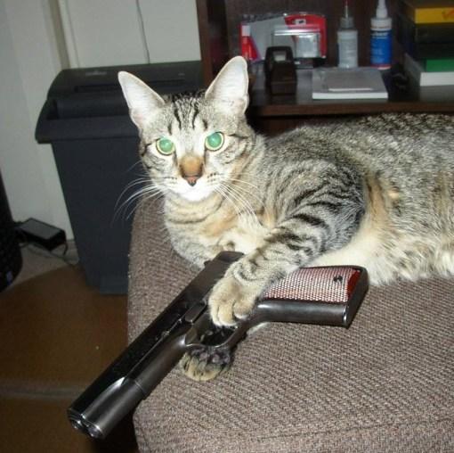 Cat Thug Life Video