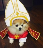 Top 10 Crazy Catholic Pope Dogs