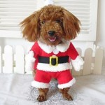 Top 10 Festive Animals Dressed As Santa