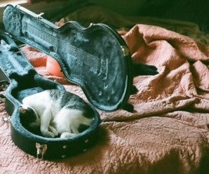 Top 10 Sleepy Cats Sleeping In Unusual Places