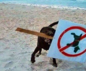Top 10 Funny Images Of Naughty Dogs On the Beach