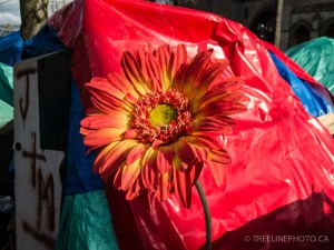 flowerInTentCity