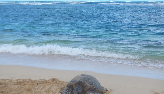 Aweoweo Beach Park – Honu Sightings