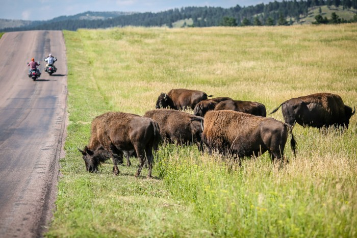 Custer State Park 19