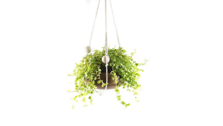 6-plant-hanger