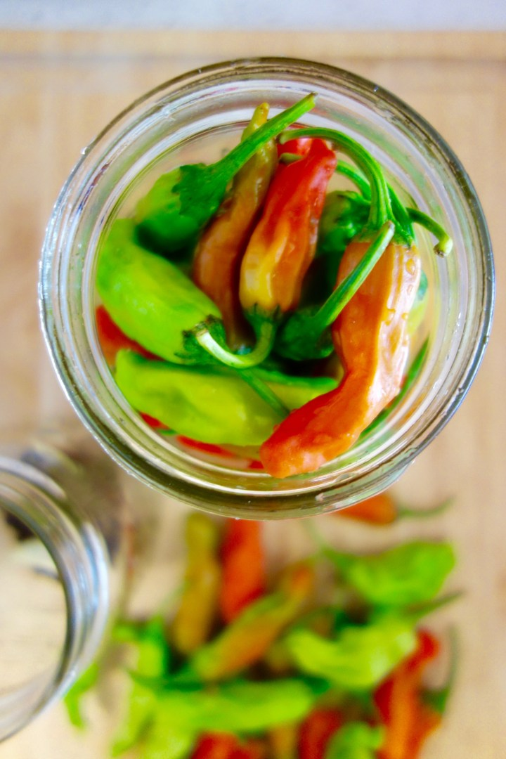 pickled-padron-peppers