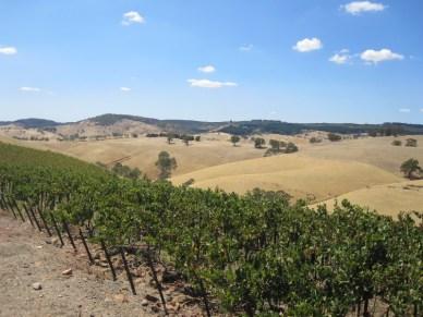 Steingarten vines