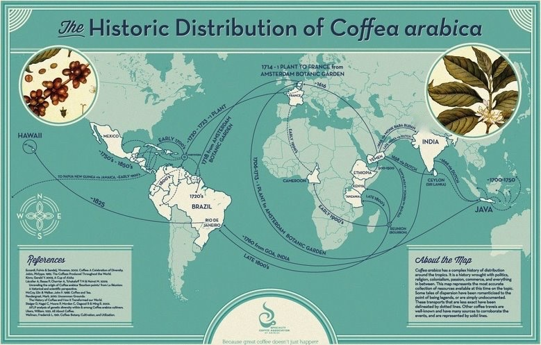 Historic Distribution of Coffea Arabica Map reprinted with permission from the Specialty Coffee Association of America.