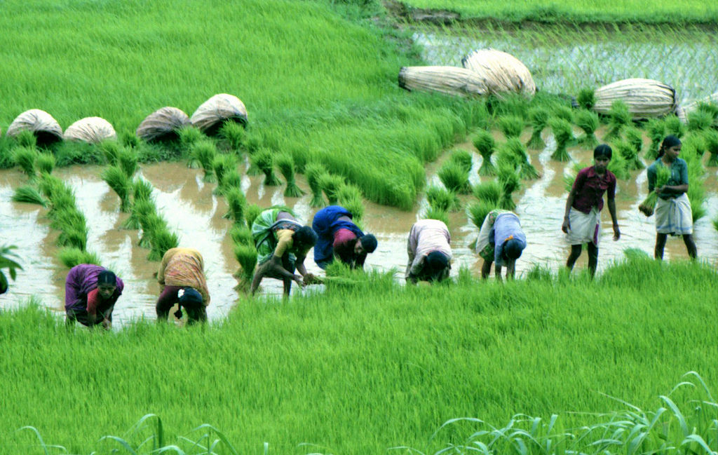 agriculture in india 1 News on indian agriculture, food processing, crops production, agri policy, trade in agriculture, farming, news on crop pricing and agri industry.