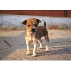Small Crop Of Indian Dog Breeds