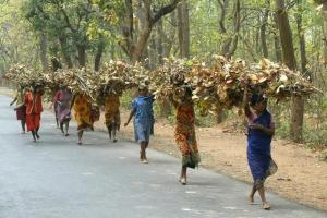 Tribal women carry bundles of twigs and leaves near Shantiniketan, 150 km (95 miles) northwest of Calcutta on March 18, 2004. REUTERS/Jayanta Shaw/Files