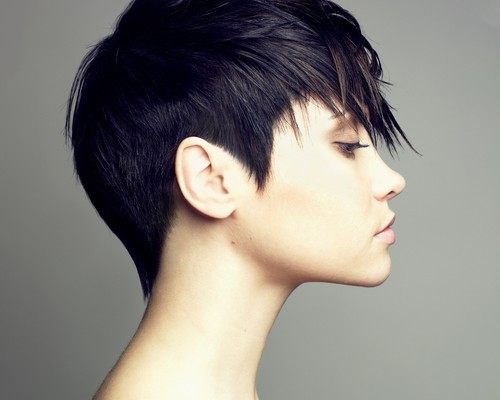 Short-hair-specialist-scottsdale-500x400