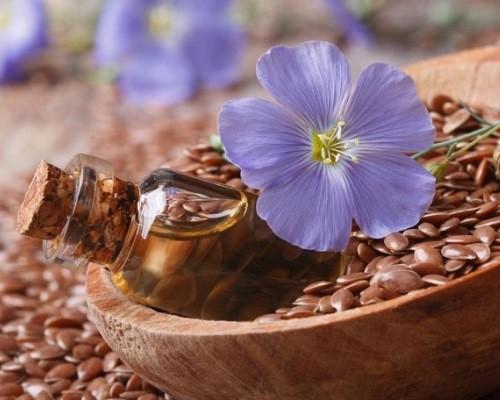 Льон користь і шкода для організму