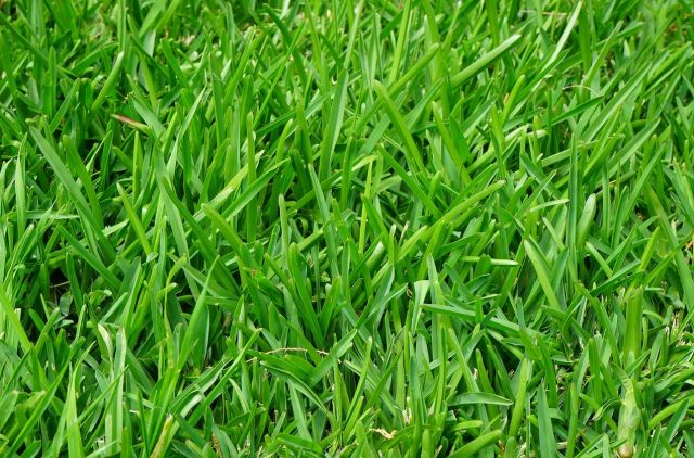 Grass lawn 01