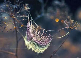 Spider web on tree limb