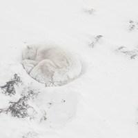 Découverte de Vincent Munier, photographe animalier des grands espaces