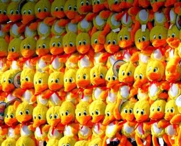 stuffed-animals-61181_640