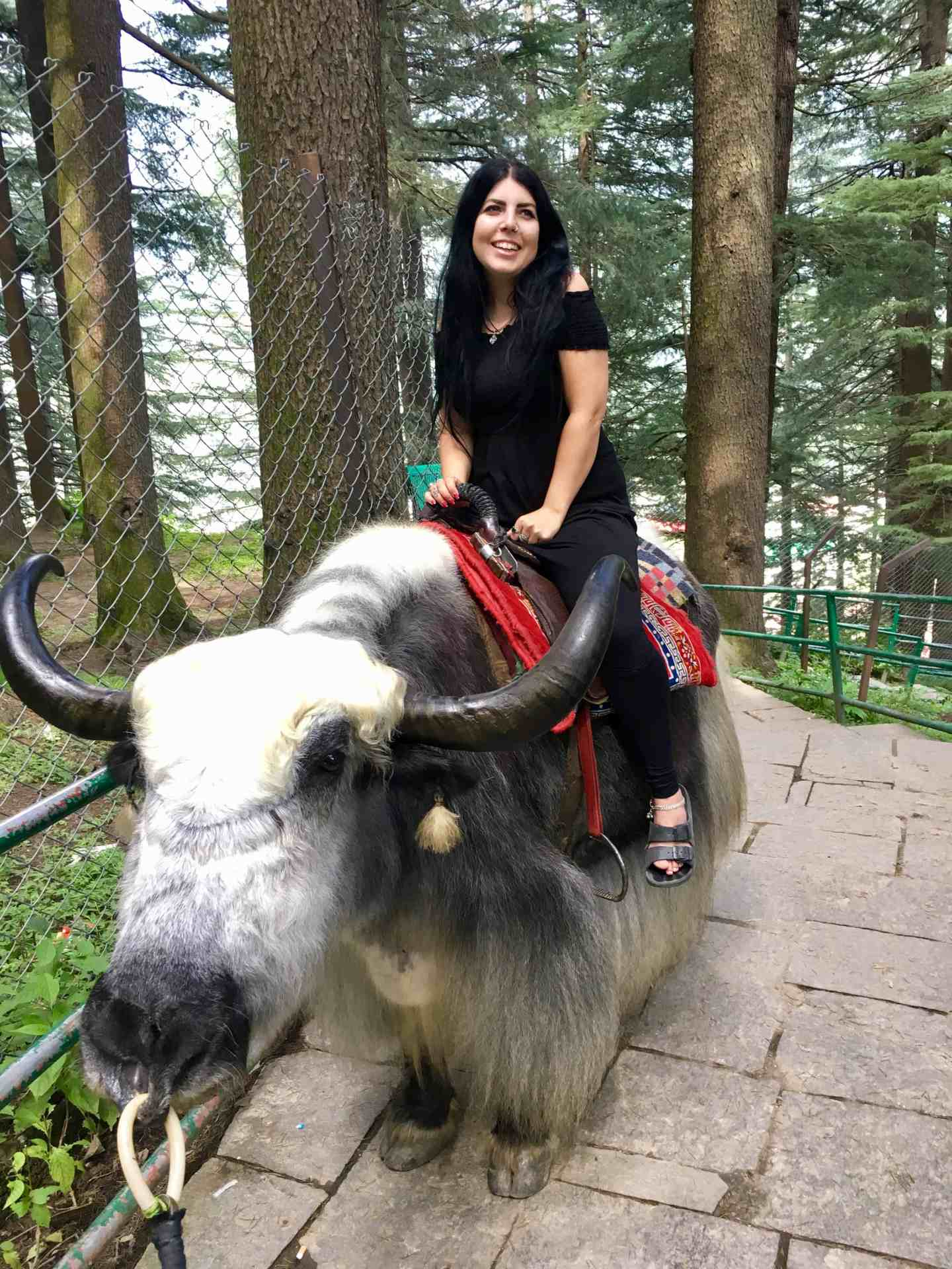 yak riding manali