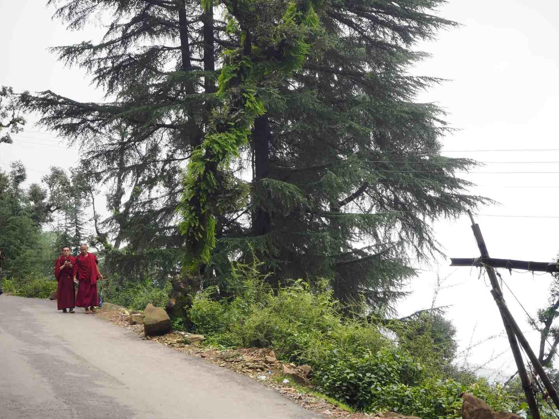 buddhist monks dharamshala