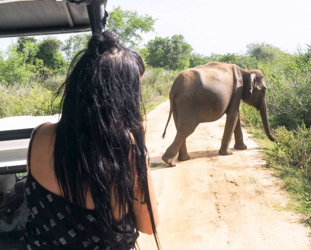 A COMPLETE GUIDE TO TAKING AN ELEPHANT SAFARI IN UDAWALAWE NATIONAL PARK