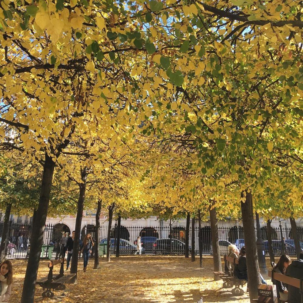La Place des Vosges prend des jolies couleurs dautomne quehellip