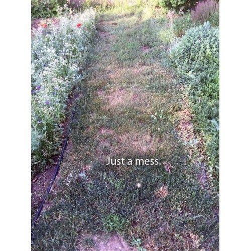 Medium Crop Of Dog Urine Killing Grass