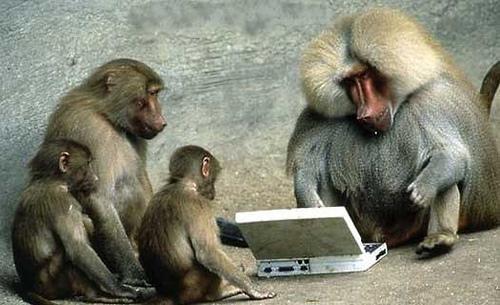 computer-monkeys