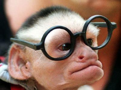 Idea Monkey