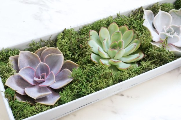 bloom-and-wild-succulents