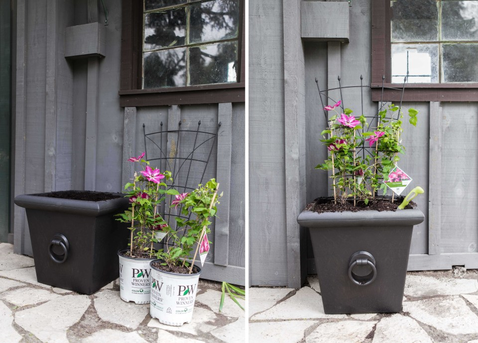 How to make a Summer Planter - Purple Clematis