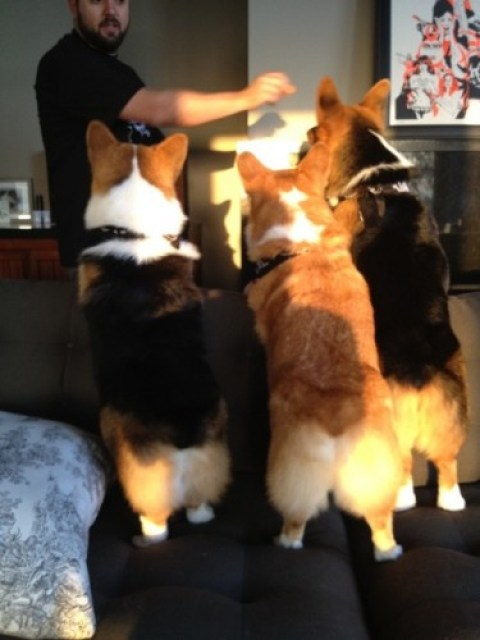 20130403 065007 Three Corgis videos on fire