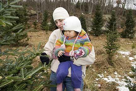 christmastreecutting2007dec006.jpg