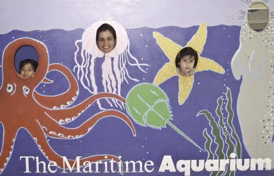 maritime-aquarium-7.jpg