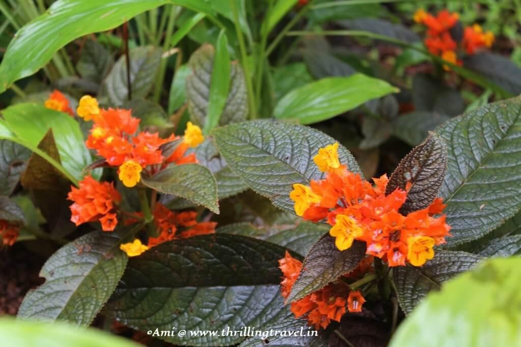 At Tropical Spice Plantation