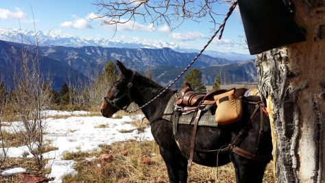 A pack mule poses in front of the colorado peaks, on a elk hunt. View from Red Table Mountain, near Basalt