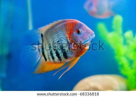 Names Of Colorful Saltwater Fish Colorful fish in aquarium