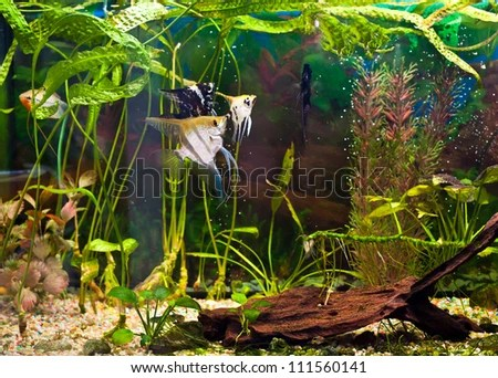 Related Pictures fish tanks planted tanks turtle tanks page 2 zilvia