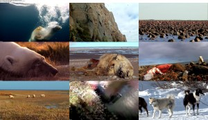 Polar Bears Ice Bear (2013) BluRay 720p