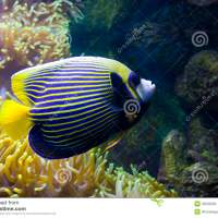 tropical fish images and names - List of Tropical Fish Names