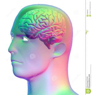 Eyes, Brain And Head Natural Health