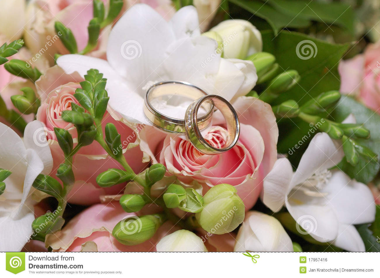 royalty free stock image two wedding rings pink rose flower image rose wedding ring Two wedding rings on pink rose flower