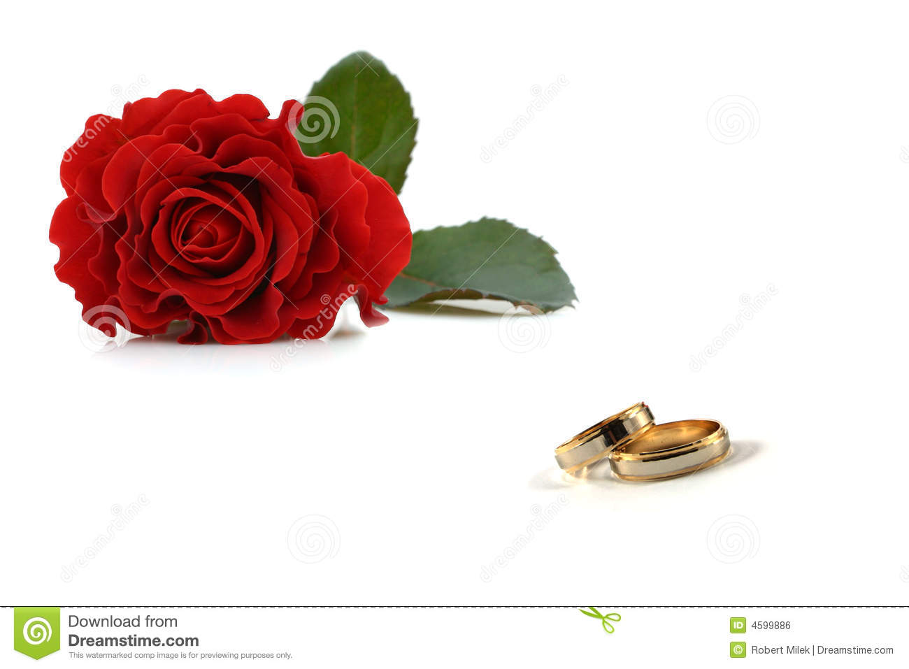 royalty free stock image wedding rings roses image rose wedding ring Wedding rings and roses