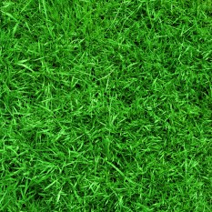 Swift- football-field-grass-background.jpg
