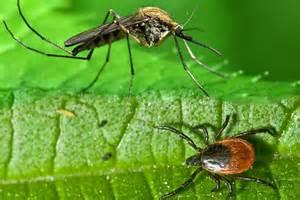 tick & mosquito