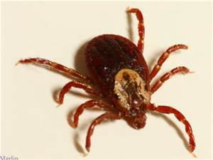 Tick Identification Services