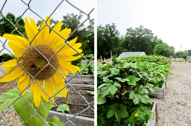 East Lake Urban Farm in Atlanta, GA | tide & bloom