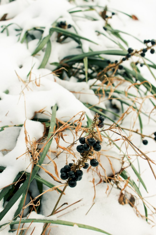 snow-day-atlanta-1a