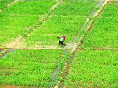 Some 25% of the agricultural production will be at risk (TOI photo)