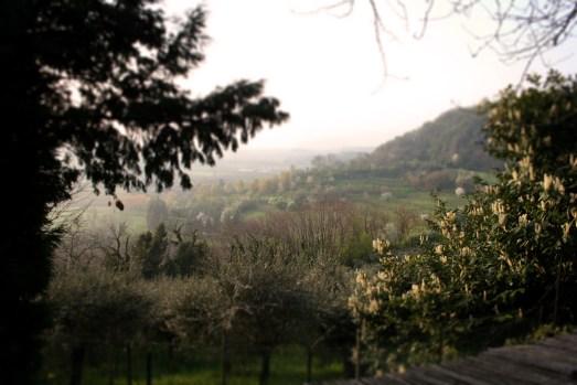 Vicenza (1)