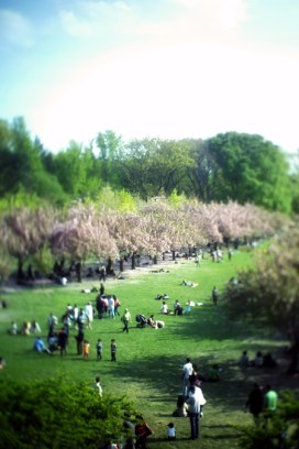 Blossoms @ Brooklyn Botanical Gardens